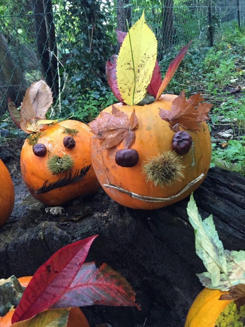 Forest shcool pumpkins