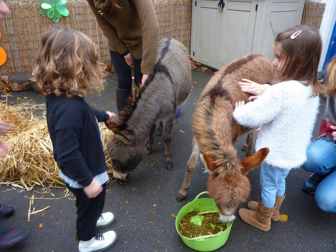 Donkeys visit pre-school