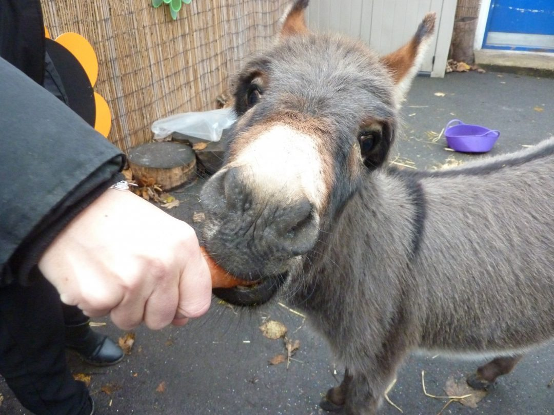 Our visiting nativity donkey